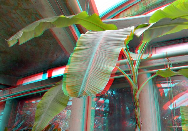 Tropenkas Victoriaserre Blijdorp Zoo Rotterdam 3D