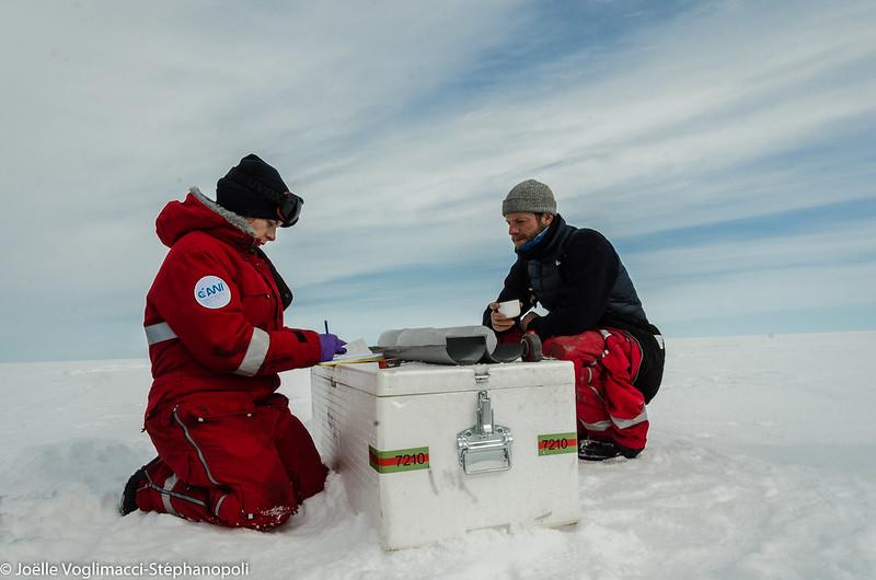 Studying a sea ice core (Nunataryuk project)