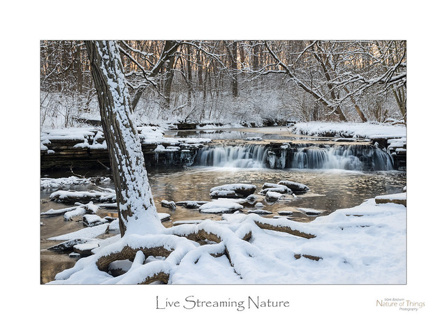 Live Streaming Nature