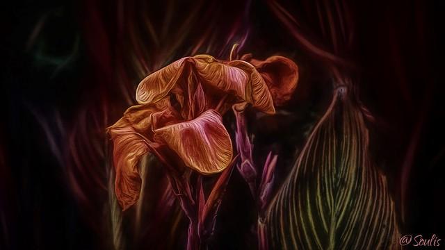 Soulis: Gladiolus