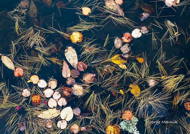 Pond Surface