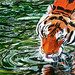 10 Exciting Parts Of Attending Animal Paintings In Acrylic - Animal Paintings In Acrylic