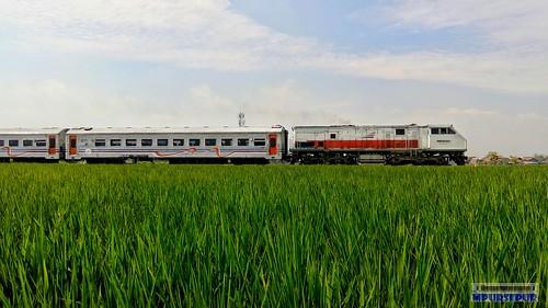 Lokal Bandung Raya Train passing rice field at Rancaekek area