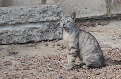A harbor cat: Maputo Mozambique