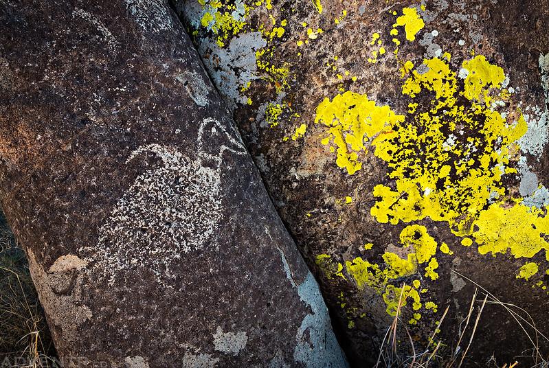 Bird & Lichen