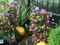 Orchids at Kew Gardens 2020