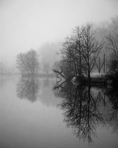 trees fog landscape columbia lakekittamaqundi maryland unitedstatesofamerica