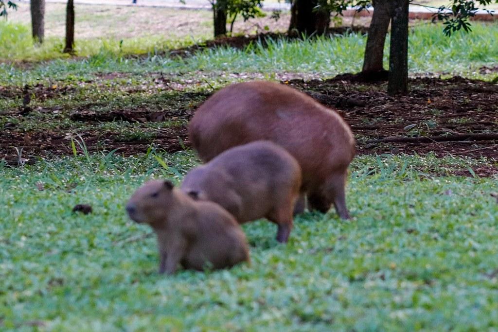 Bichos do Pantanal.