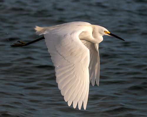 outdoor dennis adair sea water nature wildlife 7dm2 7d ii ef100400mm ocean canon florida bird bif flight
