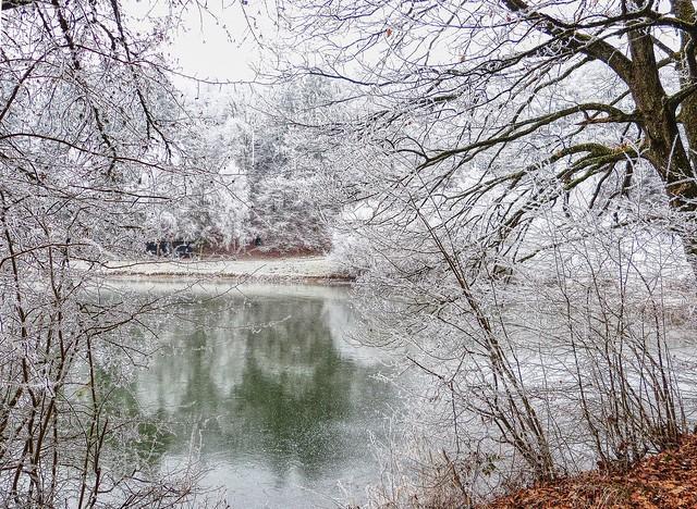 Winterwald am Teich