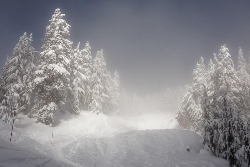 Hollyburn Peak, 17 Feb 2020