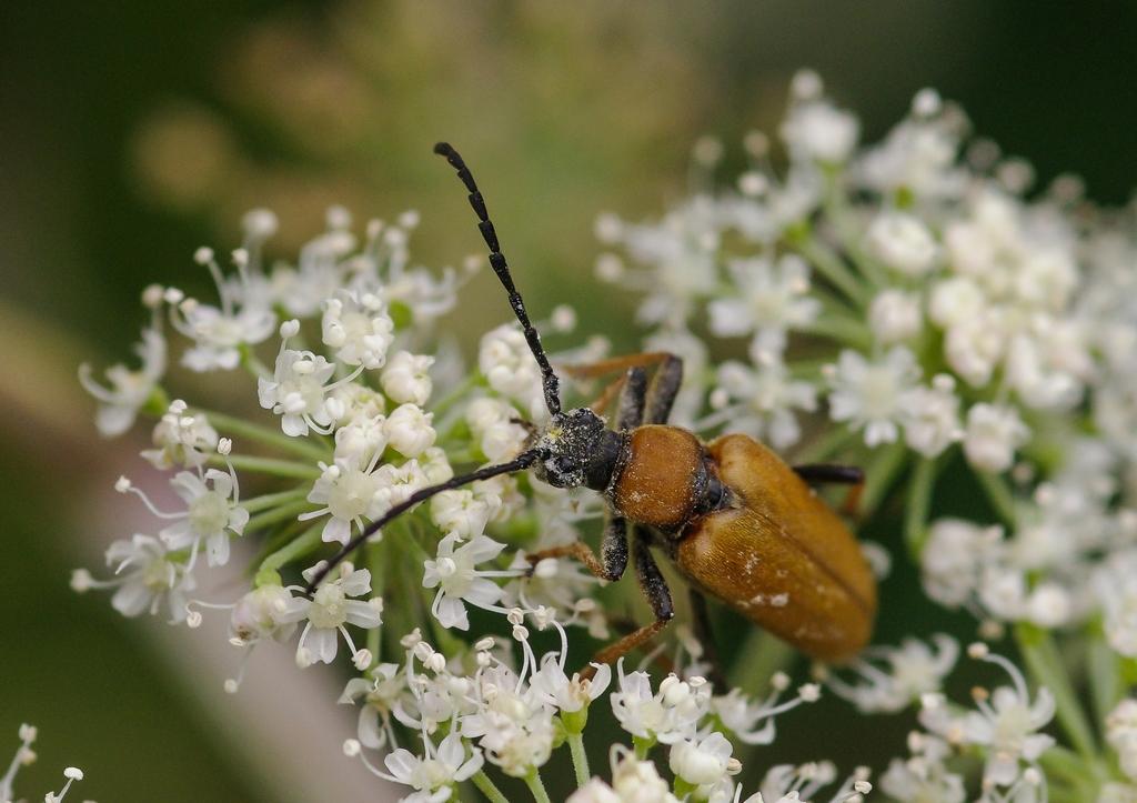 Macros/  proxi/  insectes  - Page 20 49552219031_7316b8d8bf_o