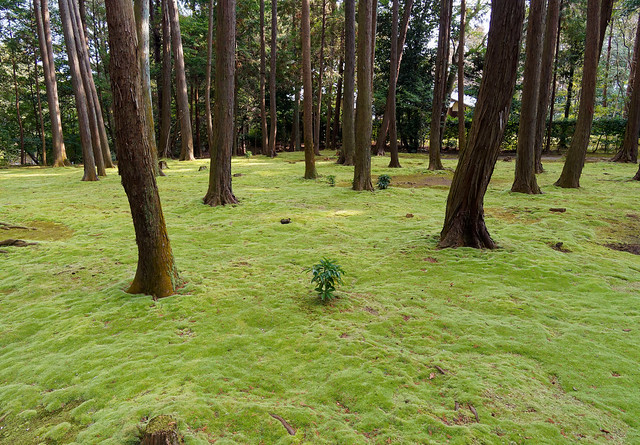 A Garden of Moss at the Tohshohdaiji Temple, Nara, Japan