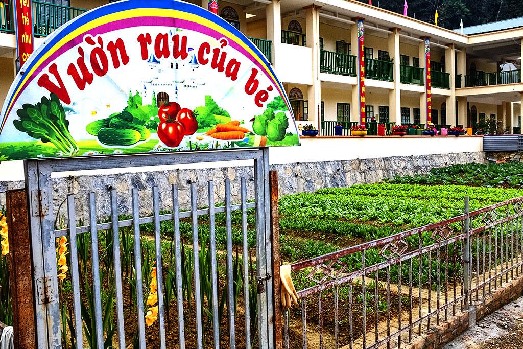 Vegetable garden at elementary school--Si Ma Cai