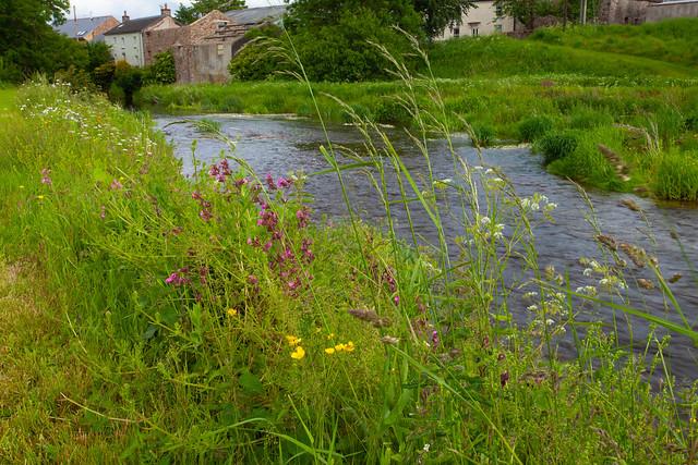 River Eden Cumbria