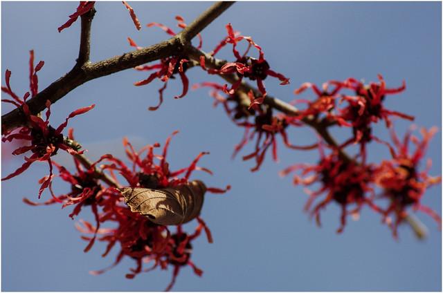 Letztes Blatt und neue Blüte