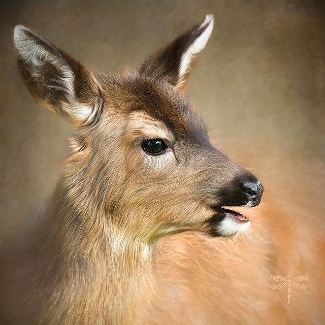dear deer . . .