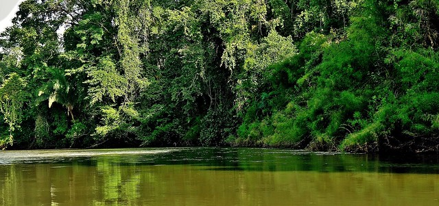 MEXICO, Las Guacamayas, direkt am Rio Lacantún, mitten im Dschungel, herrliche Natur,  19536/12389