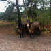 The poor Exmoor ponies were a bit wet thanks to Storm Dennis