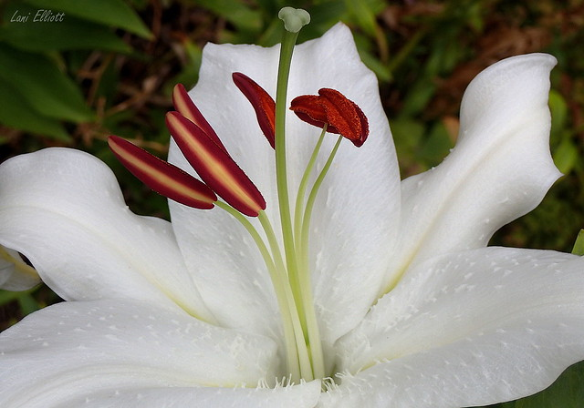 It's All About the Stamens