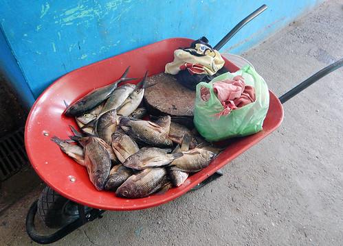 Fish in a wheel barrow in the mercadito in Marquelia, Mexico
