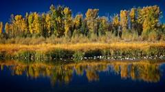 Autumn at Schwabacher's Landing