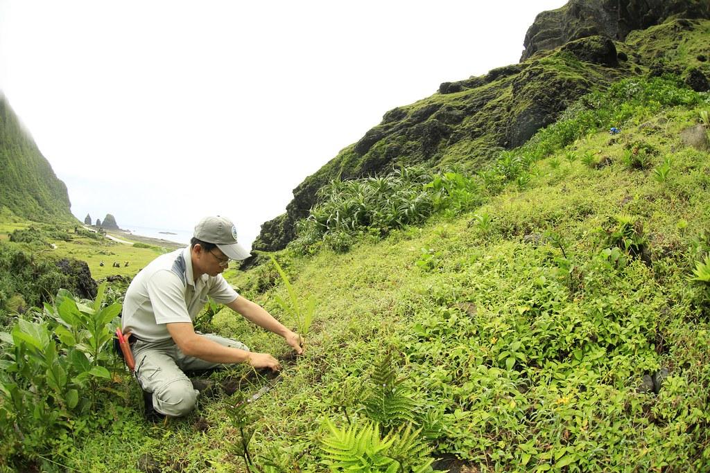 為了復育紫苞舌蘭,這些年來李權裕常往返南投、蘭嶼,揹著紫苞舌蘭種苗,種回原棲地。圖片來源:李權裕提供