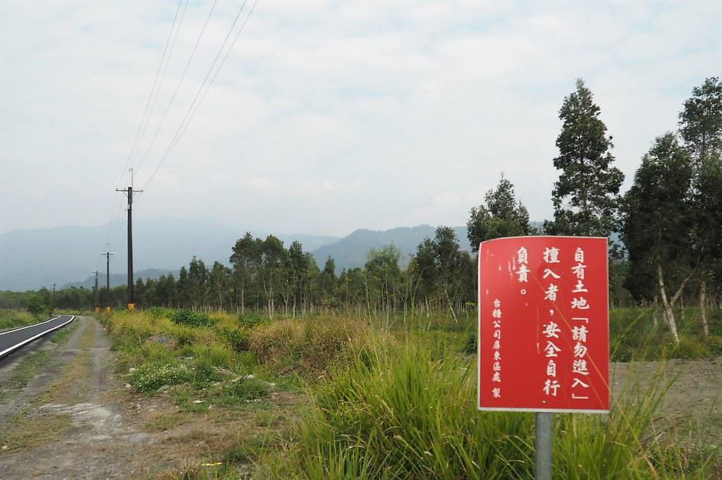 台糖新赤農場平地森林將規劃200公頃農型農電共生。攝影:李育琴
