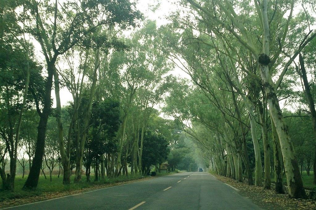 屏東185縣道沿山公路風景秀麗,在地發展沿山休閒觀光農業。攝影:李育琴