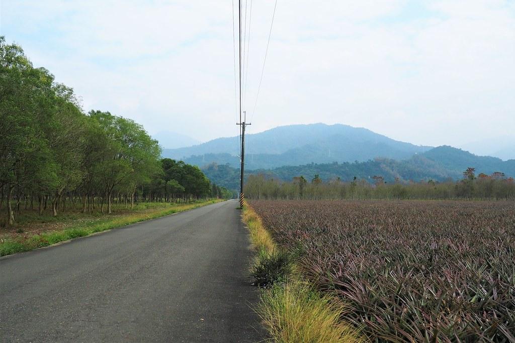 台糖新赤農場近450公頃,其中200公頃平地造林將規劃營農型農電共生。攝影:李育琴