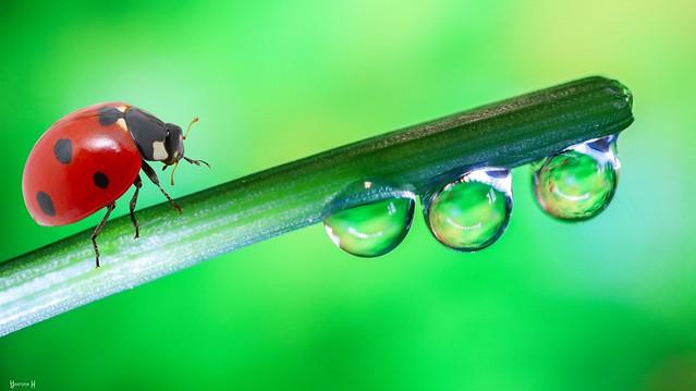 Droplets - 8103