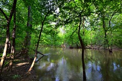 Waters and Forest of Congaree National Park