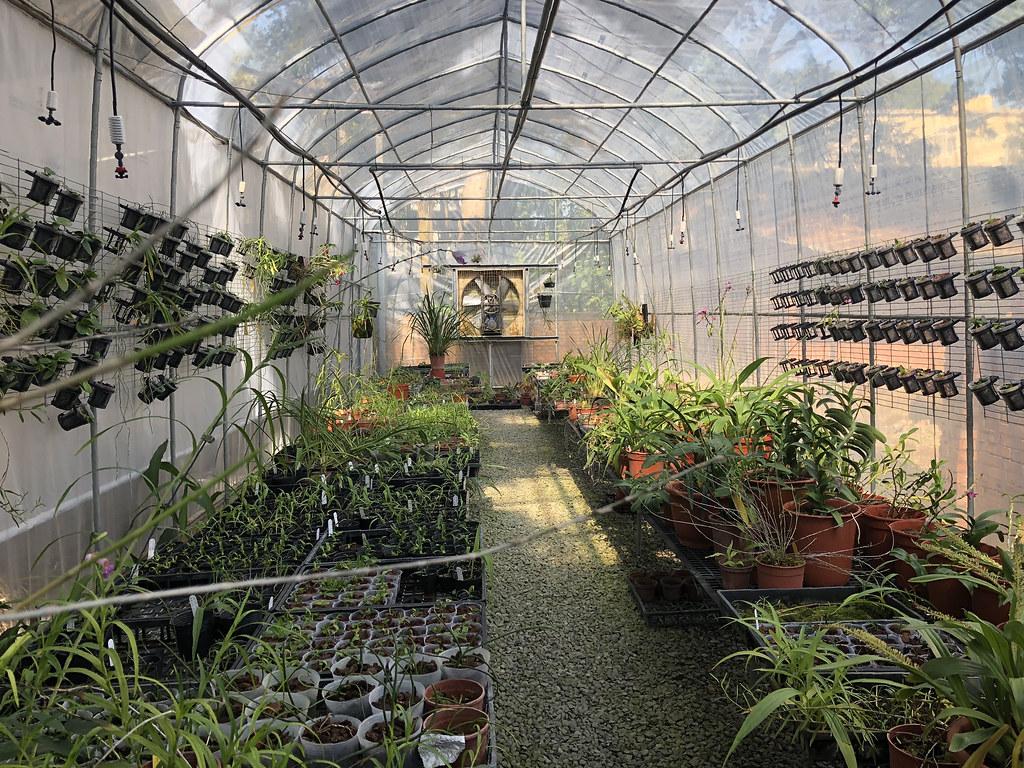 特生中心小小的溫室,擁抱無數瀕絕植物族群延續的希望。攝影:廖靜蕙