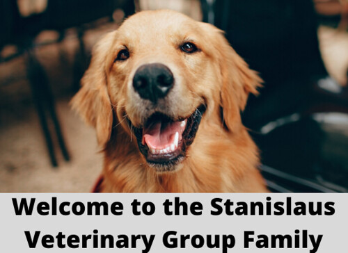 Welcome to the Stanislaus Veterinary Group Family