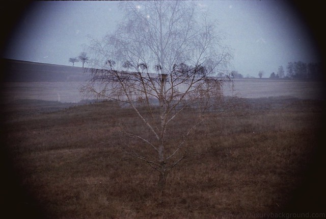 Birch tree and horizont