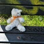Lost bear in Preston
