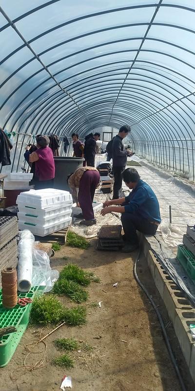 고추모종작업 | 온동네 식구들이 모여 한해 농사 시작하는 날