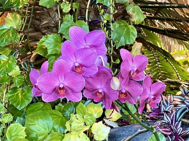 Dainty Little Orchids
