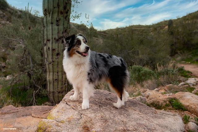 A desert hike