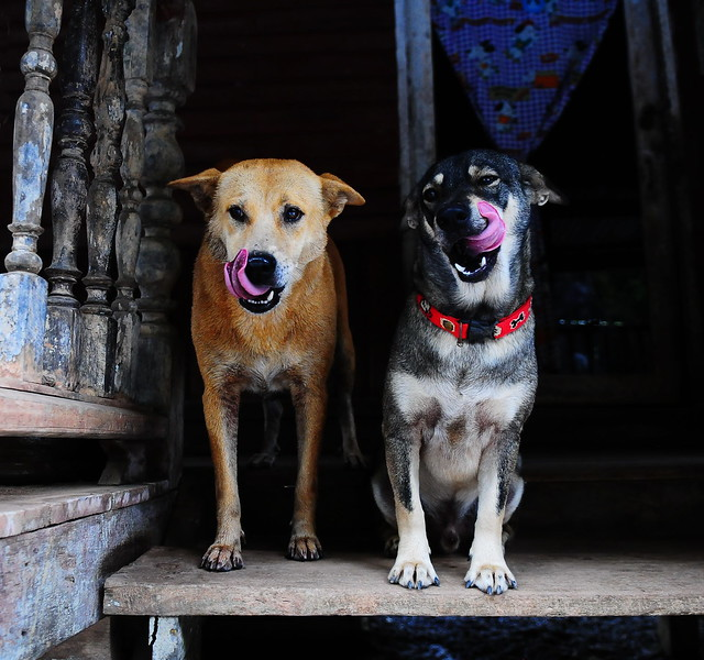 ,, 2 Silly Dogs - Explored ,,