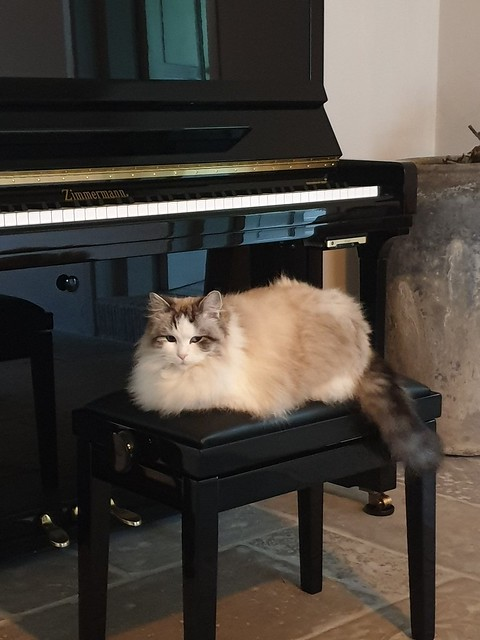 Poes op vacht op pianokruk