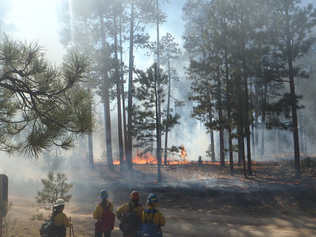 Prescribed fire in Ponderosa Pine Forests in the Jemez Mountains of Northern New Mexico