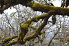 Branches support a healthy population of moss