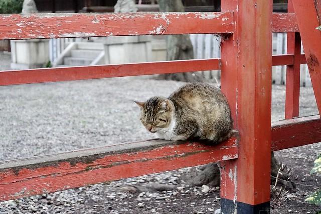 Today's Cat@2020-02-19
