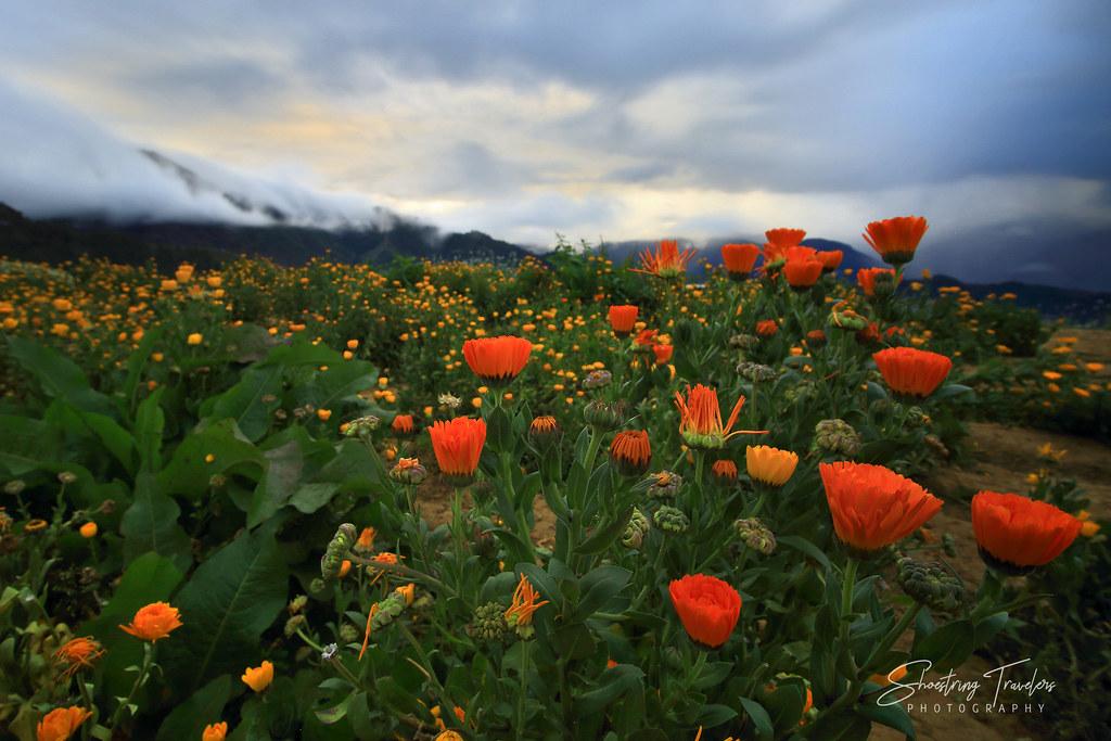 sunrise view at Northern Blossom Flower Farm, Atok