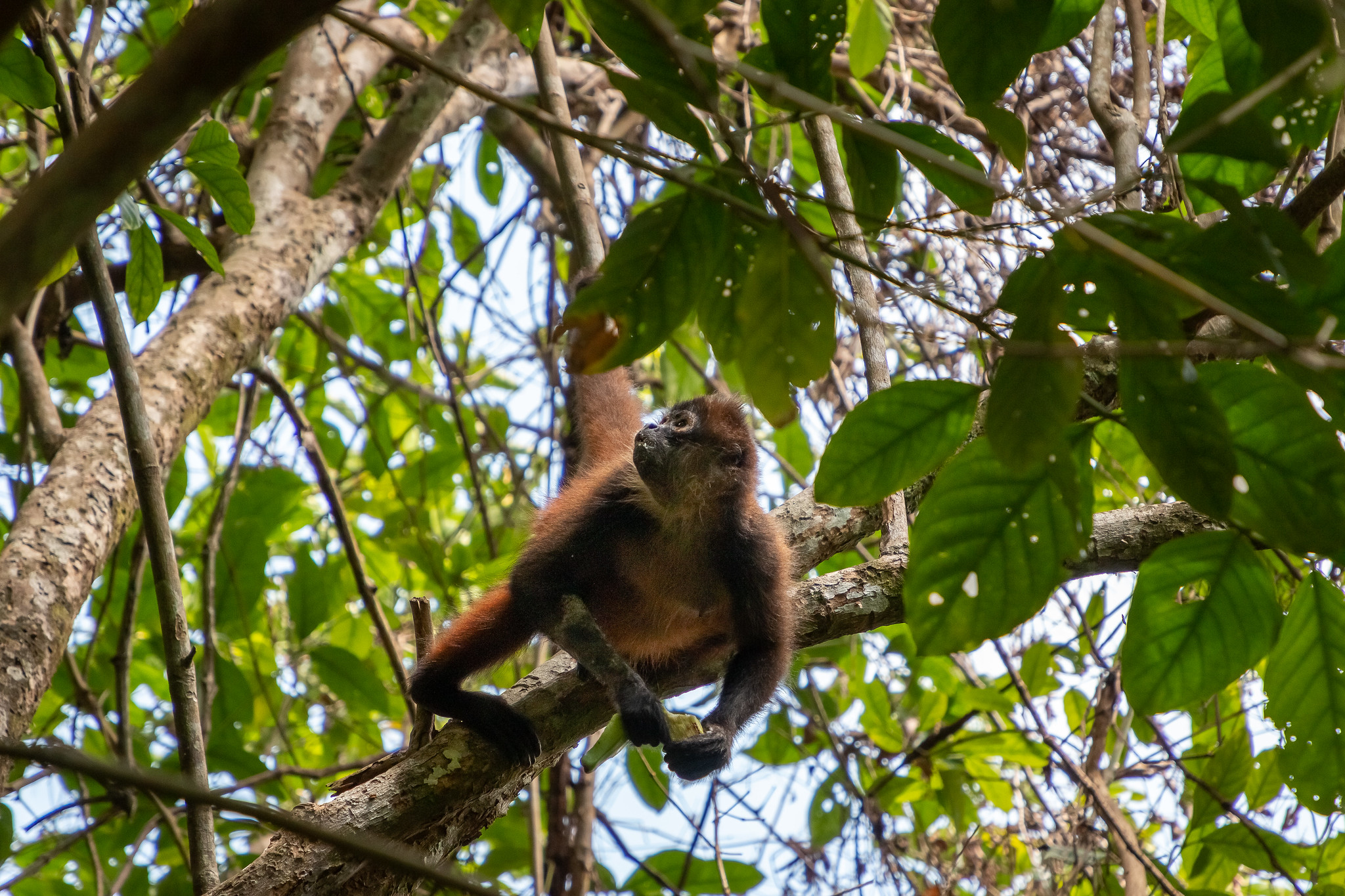 Corcovado - [Costa Rica]