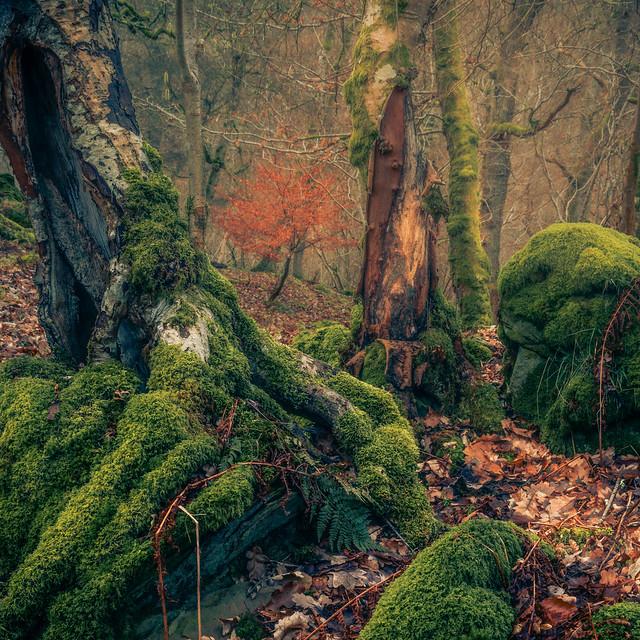 Muggleswick Woods