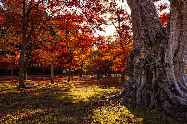 Morning at Korakuen Garden, Okayama