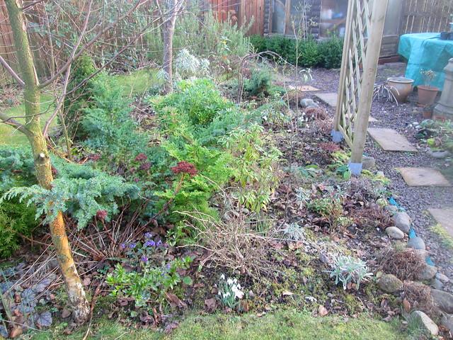 January garden, Fife