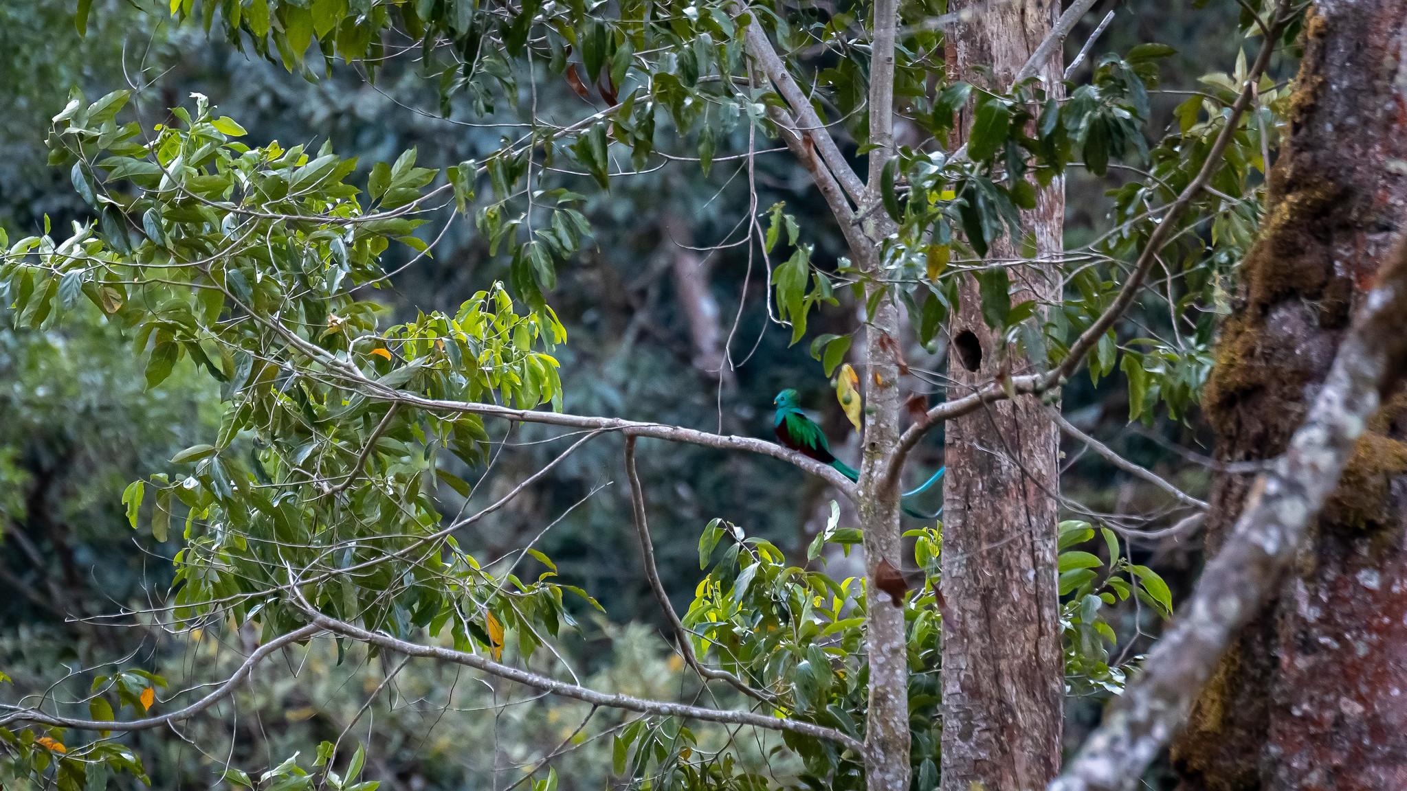 Parc National des Quetzales- [Costa Rica]